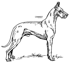 dog breed coloring pages 2