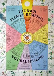 19 healing herbs bach flower remedies healing herbs rock