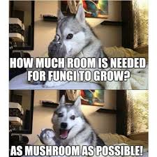 Pun Husky Meme - as mushroom as possible bad pun dog pinterest bad pun dog