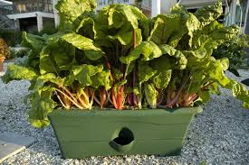 are tire gardens safe for growing vegetables
