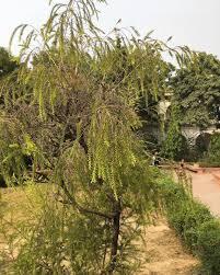 tree nature greenary gogreen green forest garden gardening