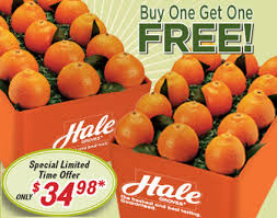 monthly fruit club hale groves bogo honeybells how about their monthly fruit club