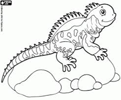 desert lizard coloring page animals coloring pages printable games