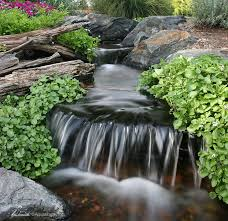 Aquascape Fish 7 Tips To Keep Pond Water Clean Aquascape Inc