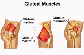 weak gluteus muscles and lower back restore health wellness