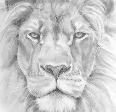 face lion sketch drawing sketch