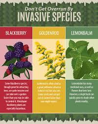 mail order native plants stunning ideas pollinator garden plants excellent northeast