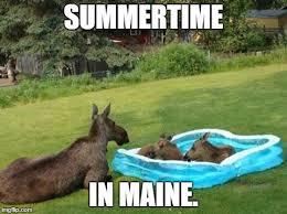 Moose Meme - lifeguard on duty imgflip