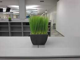 office plant physical plant arslocii placeness as art