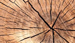 tree rings images images Tree rings archives futurity jpg