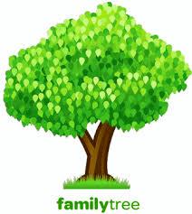 climbing your family tree with rabbi bearman