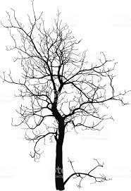 dead tree without leaves vector illustration sketched stock vector