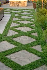 Backyard Ground Cover Options Best 25 Irish Moss Ideas On Pinterest Irish Moss Ground Cover