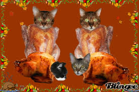 happy thanksgiving turkey and cat wallpaper beautiful cat