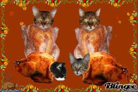 happy thanksgiving turkey and cat wallpaper beautiful cat
