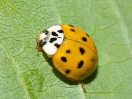 wanderin u0027 weeta with waterfowl and weeds of ladybugs and linden