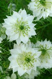 White Flowers Pictures - 25 best green flowers ideas on pinterest floral arrangements