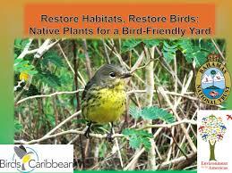 native plants for birds international migratory bird day u2013 birdscaribbean