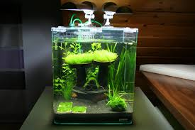 Aquascaping Shop Taking The Plunge How To Get Started In The Aquarium Hobby