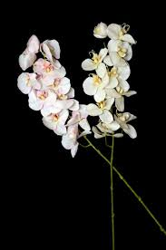 Artificial Orchids Artificial Orchid Lacase Mu
