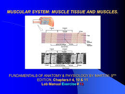 Answer Key For Anatomy And Physiology Lab Manual Website For Just Anatomy Learn Anatomy Learn