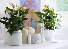 Design For Indoor Flowering Plants Ideas Design Indoor Flower Pots Exquisite Decoration 20