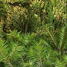 diy fresh greens garland flyboy naturals flyboy naturals llc