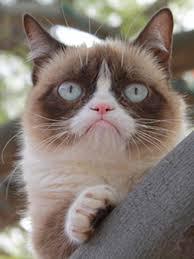 Omg Cat Meme - omg internet meme sensation grumpy cat to star in family comedy