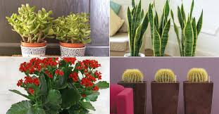 the most common indoor cacti and succulents world of succulents
