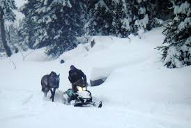 Photos Of Snow Horse Rescued After 6 Weeks In Deep Snow Atop Togwotee Features