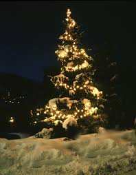 photo christmas tree in snow free christmas images