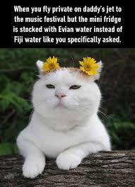 Rich Cat Meme - just rich girls problems memes comics pinterest rich girl