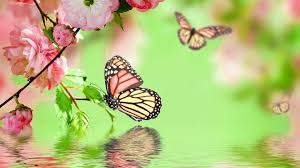 butterfly wallpapers lyhyxx com