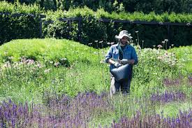 When Is Lavender In Season In Michigan by You U0027ve Got Your Bee Wildflower Seed Mix What Now Habitat Network