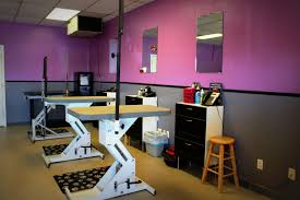 aurora pet grooming our dog grooming services