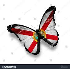 Florida Flag Facts Florida Flag Butterfly Isolated On White Stock Illustration