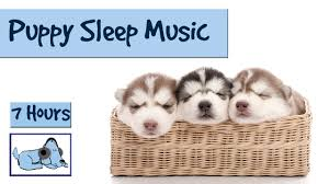 Go To Bed In French Help Your Puppy Go To Sleep At Night With This 7 Hour Song Relax
