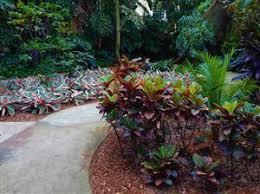 blog arrivals palms cycads u0026 tropical plants short