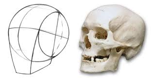 Bones That Form The Cranium How To Draw The Head From Any Angle Stan Prokopenko U0027s Blog