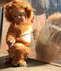 Baby Lion Costume Baby In Lion Costume Has Adorable Moment With Real Lion