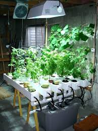 lights to grow herbs indoors light for growing herbs indoors grow light for indoor kitchen herb