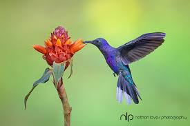 hummingbird flowers what are some artificial flowers that would attract