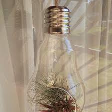 buy lightbulb terrarium u2022 air plants in glass globe u2022 glass gardens