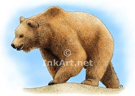grizzly bear stock art illustration