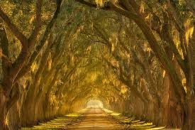 20 of the world s most beautiful tree tunnels cube breaker
