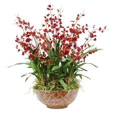 oncidium orchid orchid in bowl 30 burgundy