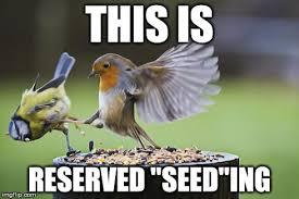 Meme Bird - bird sparta meme generator imgflip