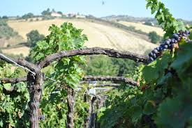 abruzzo wine the top wineries making quality wines