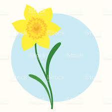 daffodil incl jpeg stock vector art 165033063 istock