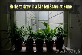 Indoor Herb Garden Light 6 Great Herbs To Grow In A Shaded Space At Home Motherhood Defined